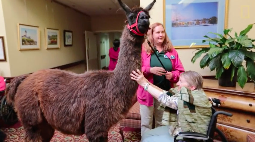 Una llama ayuda a una anciana en una residencia geriátrica americana