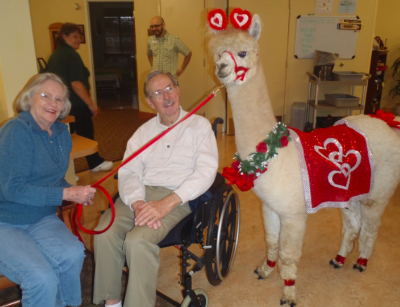 Terapia con animales en residencias de ancianos