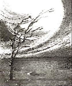 el árbol que brota