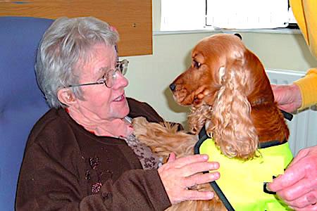 terapia con animales en residencia