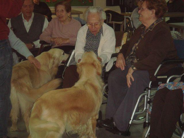 Perros en residencias geriátricas